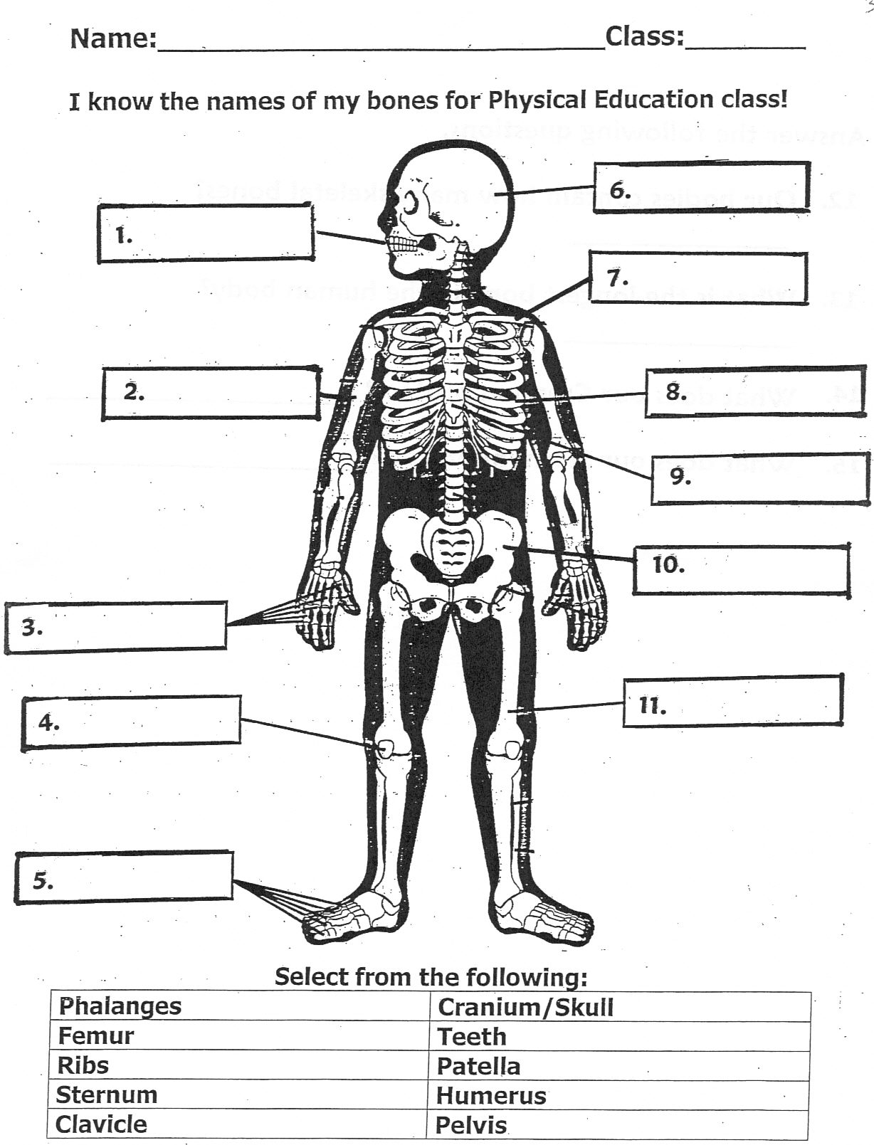 Printables Bones Of The Body Worksheet pete brough this worksheet is a great way for your kids to learn the bones in human body