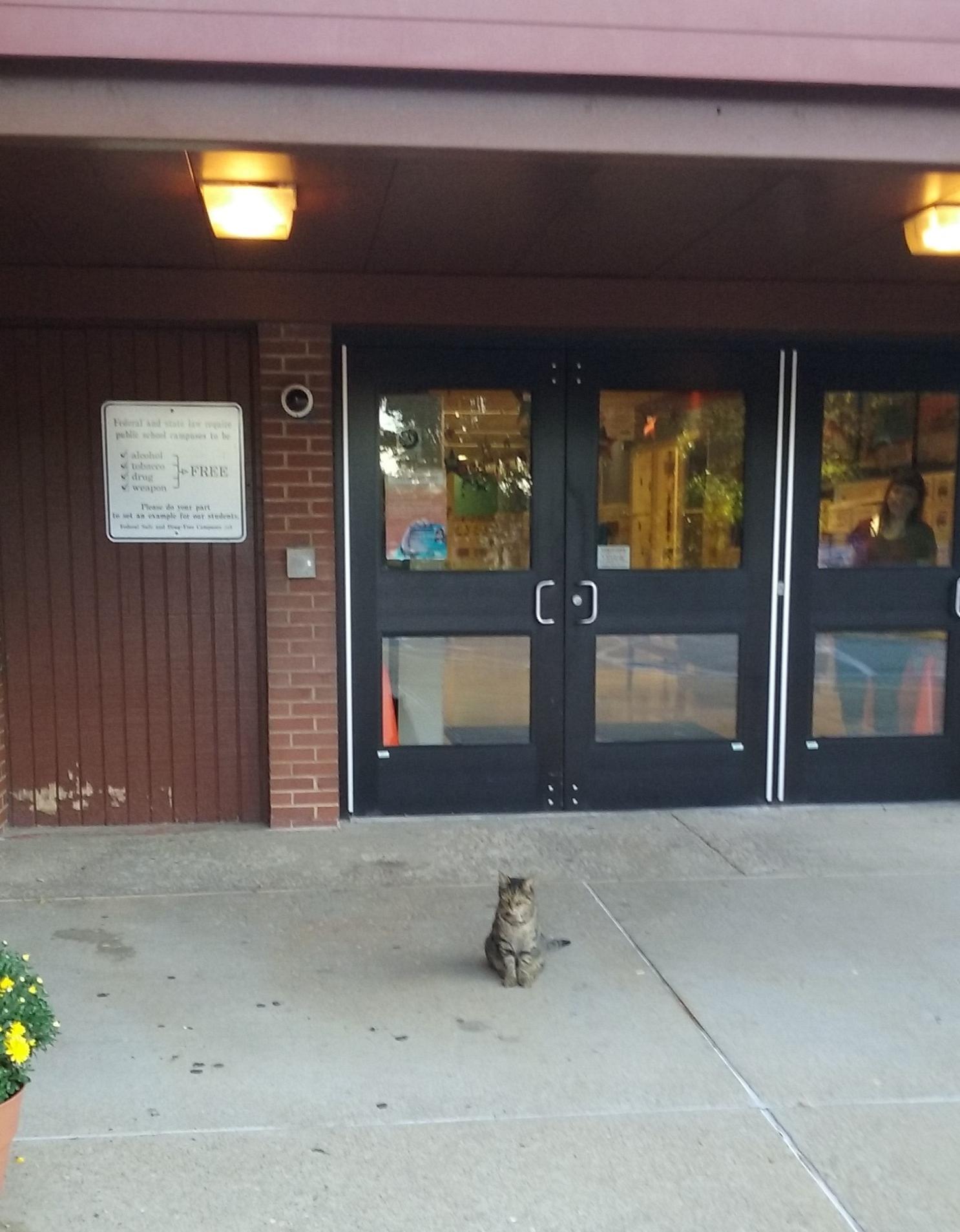 """Local cat looking for """"Kittygarten"""""""