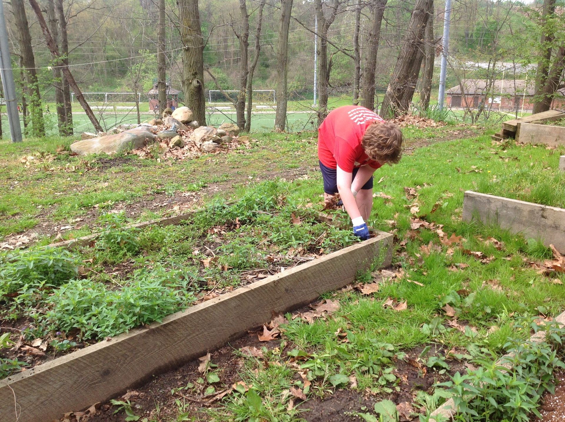 Working in raised beds behind the school
