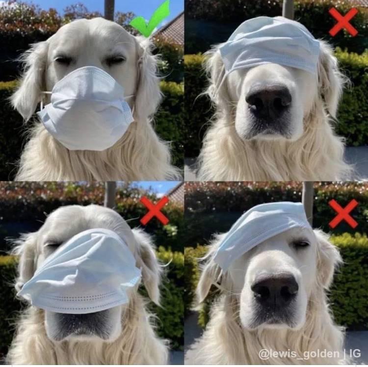 4 dogs wearing masks