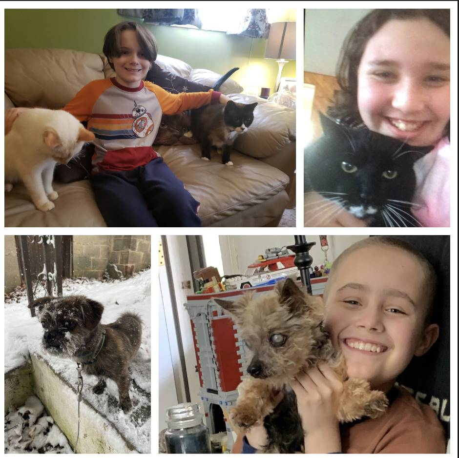4 pictures with students and their pets
