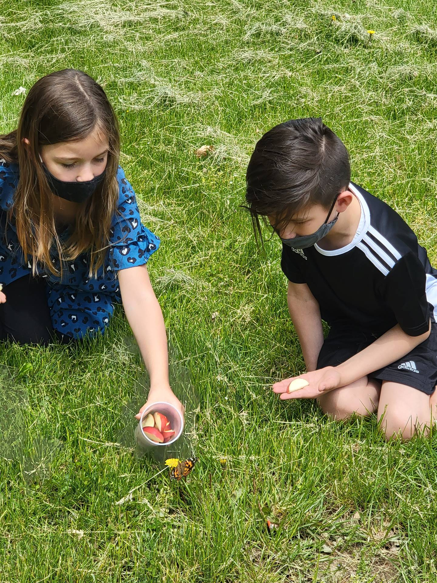 Ms. Kattouf and 2C released their butterflies today